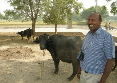 Image showing Walter with his cows