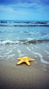 Image of a starfish laying on a beach