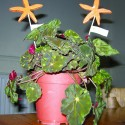 Image showing a plant decorated with Starfish Plant Pot Sticks